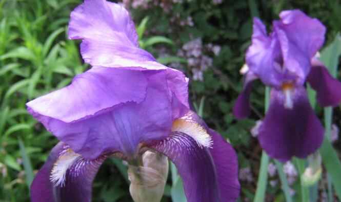 garden rotate 2
