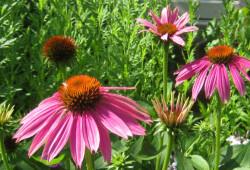 garden rotate 3