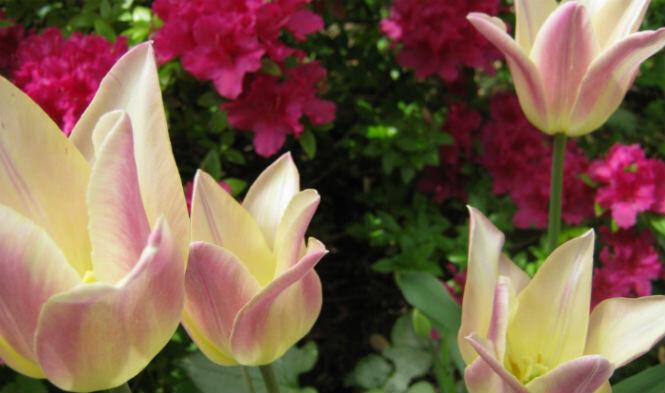 garden rotate 1