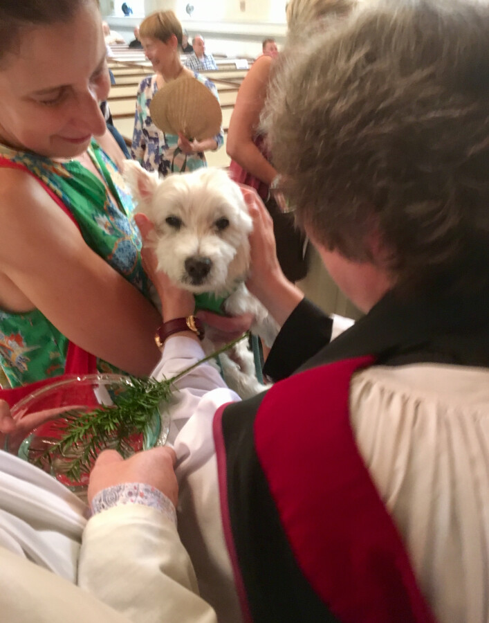 Blessing of the Animals 2017 10