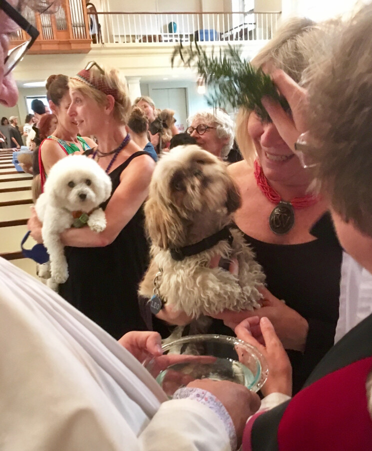 Blessing of the Animals 2017 12