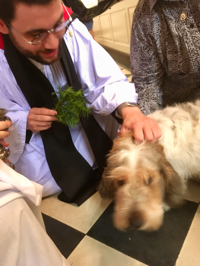 Blessing of the Animals 2017 5
