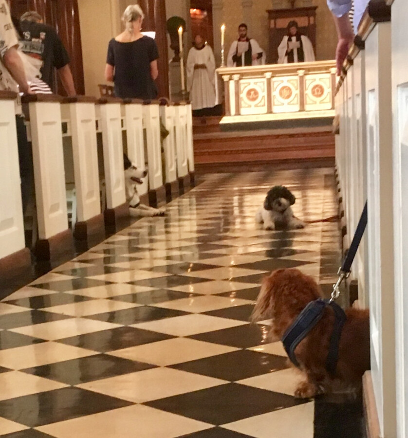 Blessing of the Animals 2017 22