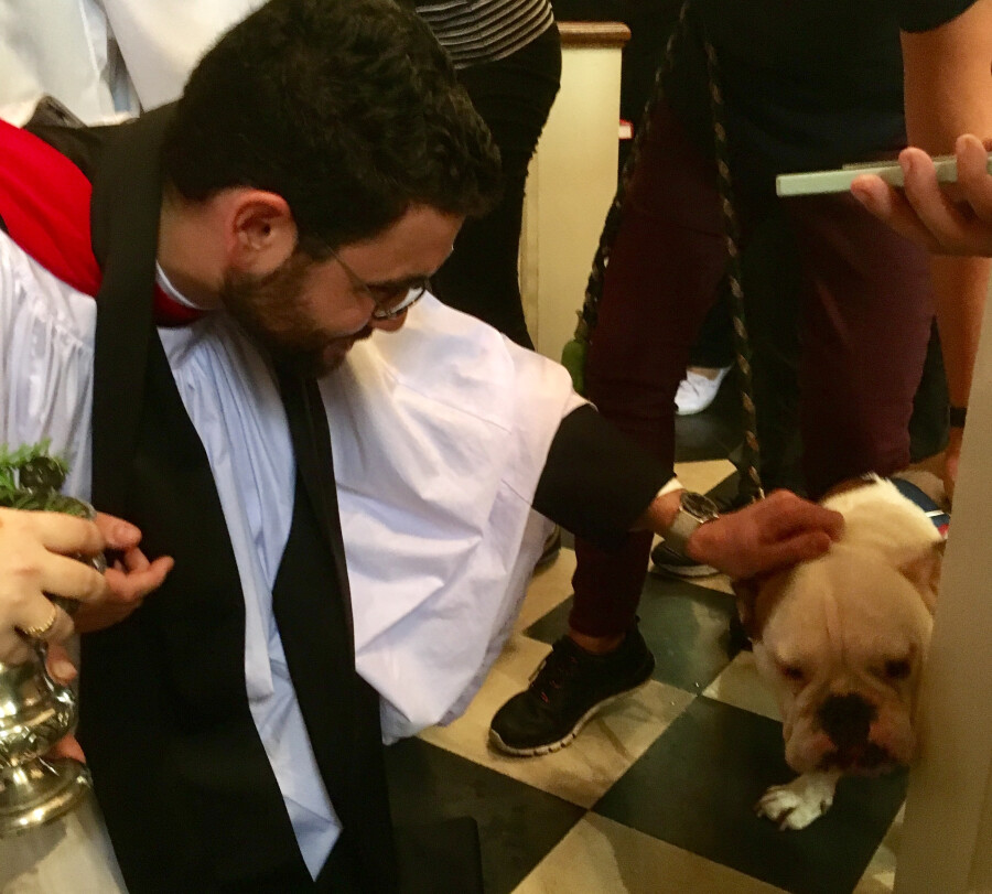 Blessing of the Animals 2017 19