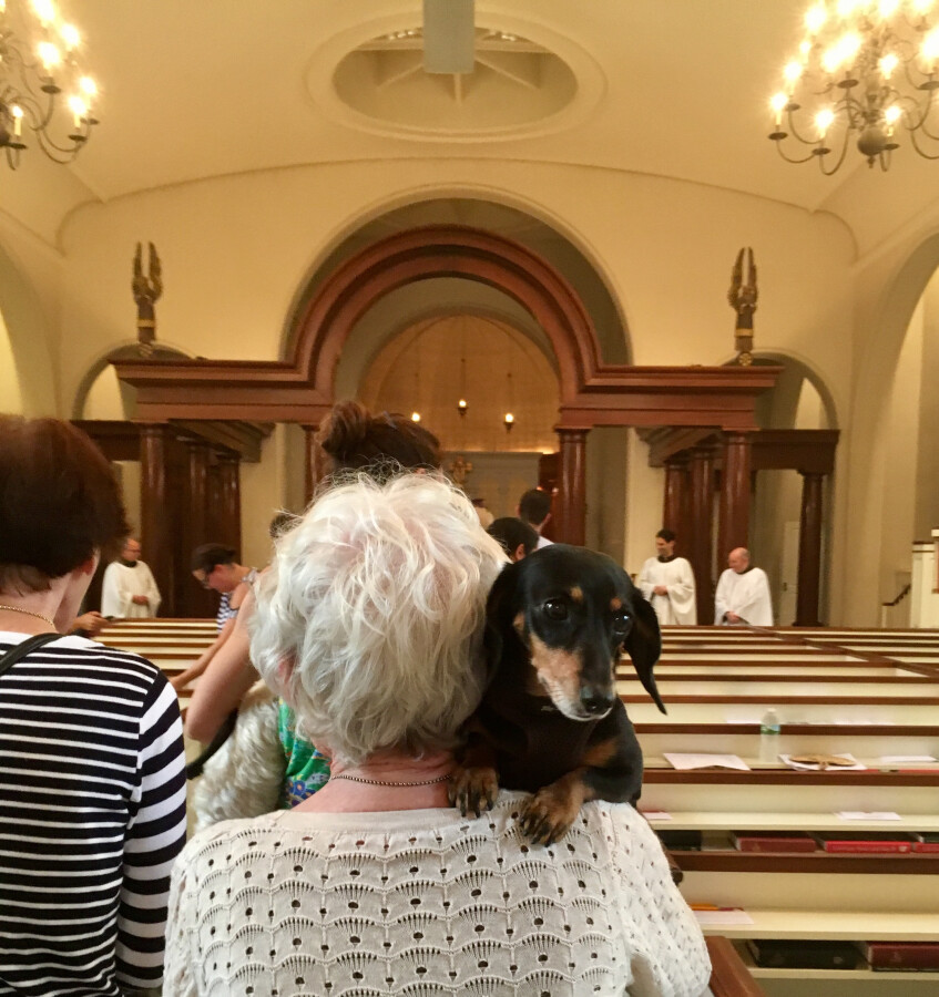 Blessing of the Animals 2017 21