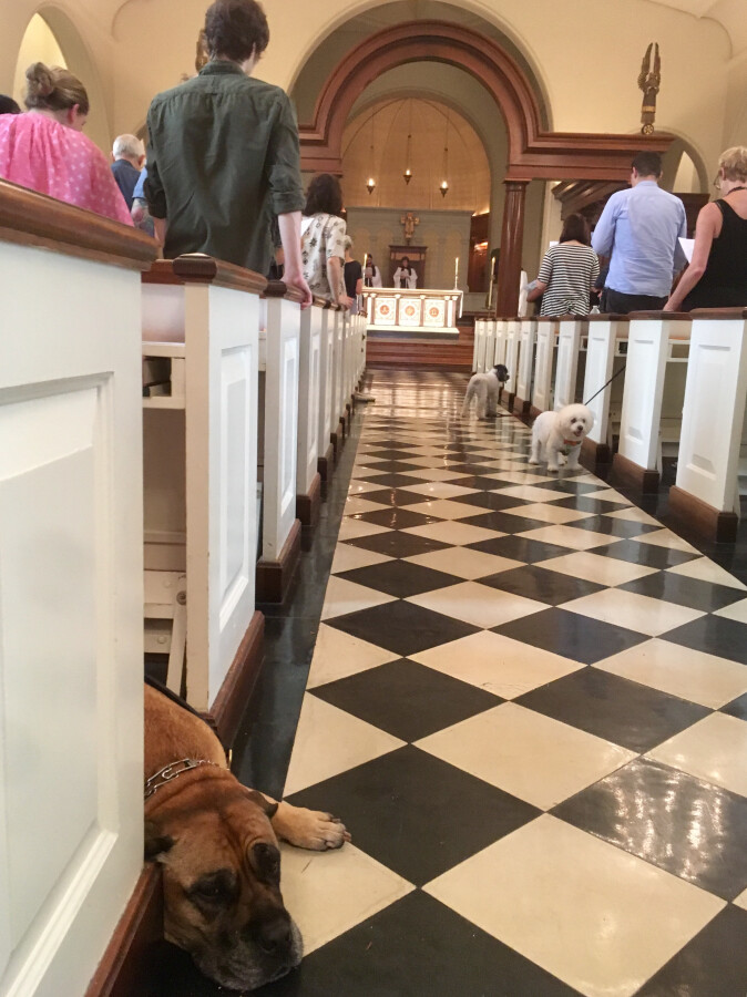 Blessing of the Animals 2017 32