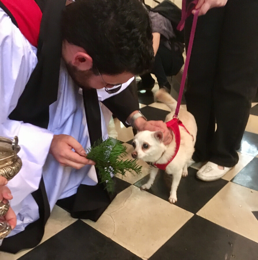 Blessing of the Animals 2017 38