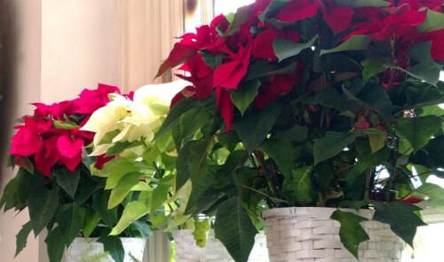 Christmastide at St. Luke's